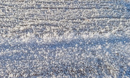 Frosted wood in sunlight. In winter Royalty Free Stock Images
