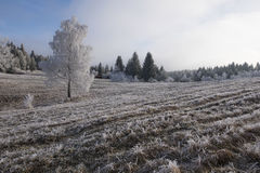 Frosted zima krajobrazu scena Obrazy Stock