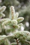 Frostee Xmas tree Royalty Free Stock Image