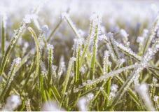Frosteffekter på gräs Royaltyfri Foto