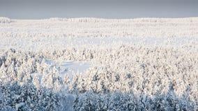 Frosten bog. Kõrvemaa Bog, Estonia Royalty Free Stock Image