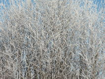 Frosten bush Royalty Free Stock Images