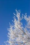 frosthoar Arkivfoton