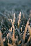 frosthoar Arkivfoto