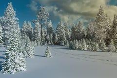 Frostig barrskog för vinter i snön arkivbilder