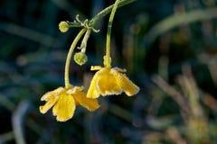 frostig blomma Royaltyfri Foto