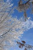 frostig dag Arkivfoton