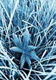 frostig gräsleaf Royaltyfri Fotografi
