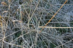 Frostig grässlätt Royaltyfria Bilder