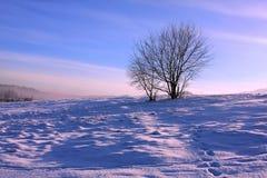 Frostig gryning i berg, ensam tree Arkivbild