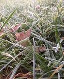 Frostig jordning Arkivfoton