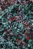Frostig lövverk underfoot arkivfoto