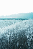 frostig liggandevinter Royaltyfri Foto