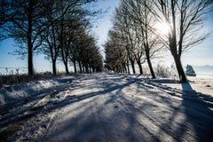 frostig liggandevinter Filialer som täckas med snö och is i kall vinter, rider ut Royaltyfri Foto