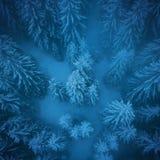 Frostig molnig dag i träd för prydlig skog för berg snöig i snöstormen Filmiskt skott av en intensiv häftig snöstorm Jul royaltyfria bilder