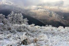 frostig morgon Fotografering för Bildbyråer