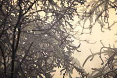 frostig morgon Arkivfoton