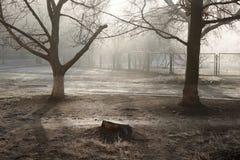 frostig morgon Arkivfoto