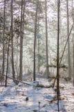 frostig morgon Royaltyfri Fotografi