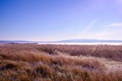 Frostig morgonsikt fotografering för bildbyråer