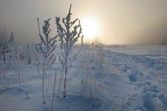 frostig morgonvinter Fotografering för Bildbyråer