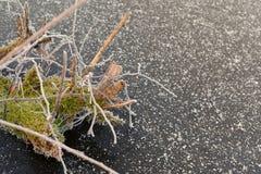 Frostig mossa med netto slut för spindel upp över snöig is Arkivfoto