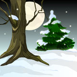 frostig natt Arkivfoton