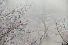 Frostig natur Fotografering för Bildbyråer