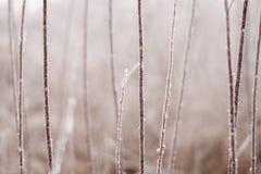 Frostig plats av buskefilialer som täckas av frost på en bakgrundsnolla Arkivfoton