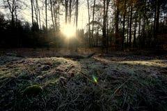 frostig skog Fotografering för Bildbyråer