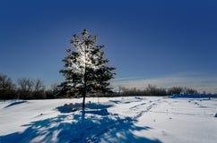 Frostig snöig natt med en purpurfärgad himmel, julgran på natten royaltyfri bild
