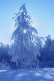 Frostig solig dag i bergen Fotografering för Bildbyråer