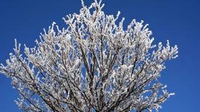 Frostig solig morgon Täckande trädfilialer för rimfrost i vinter royaltyfri foto