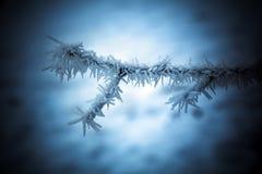 Frostig trädfilial i snöig vinterplats Arkivbild