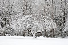 Frostig Tree Arkivbilder