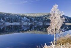 frostig tree Arkivfoto