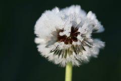 frostig växt Royaltyfri Fotografi