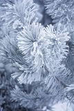 frostig vinter Royaltyfri Fotografi