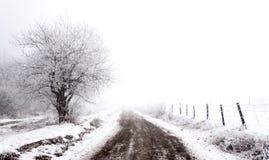 Frostig vinter Arkivbild
