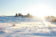 frostig vinter Royaltyfria Bilder