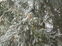 frostig vinter för morgonnatursnowfall Fotografering för Bildbyråer