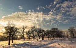 Frostig vinter med solnedgång Fotografering för Bildbyråer