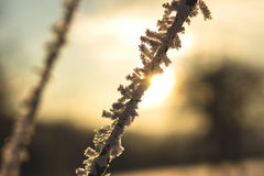 Frostig vinter med solnedgång Royaltyfria Bilder