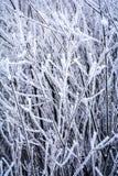 Frostig vinterbakgrund med iskalla filialer och ris Royaltyfri Bild