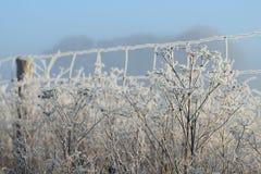 Frostig vintermorgon Arkivbild