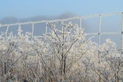 Frostig vintermorgon Arkivbilder