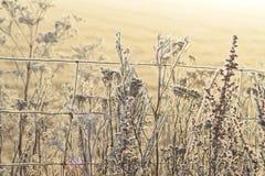 Frostig vintermorgon Fotografering för Bildbyråer