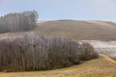 Frostiga bergiga fält för bygdsikt med träd Royaltyfria Foton