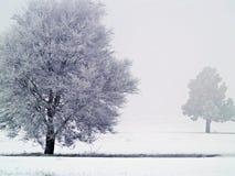frostiga dimmiga trees 1 Arkivbild