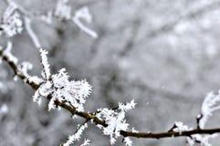 Frostiga filialer av trädet i vinter Fotografering för Bildbyråer